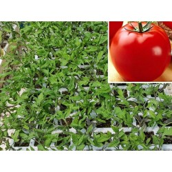 Pack 9 pcs. OPTIMA TOMATE...