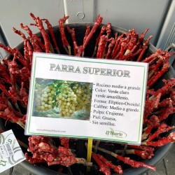 PARRA SUPERIOR RAÍZ DESNUDA