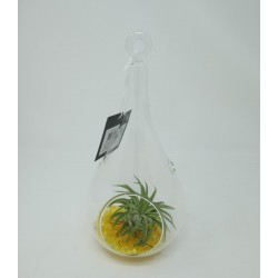 TILLANDSIA DECO-GLASS