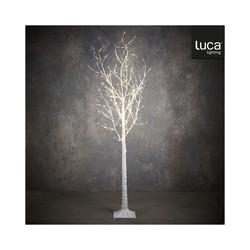 BIRCH TREE 600LED WHITE...