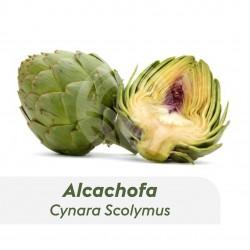 Alcachofa Lorca