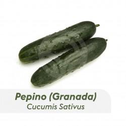 Pepino Variedad Granada
