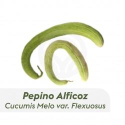 Pepino Alficoz