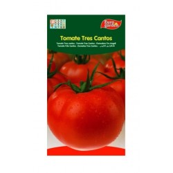 SEEDS G-TOMATO THREE SONGS
