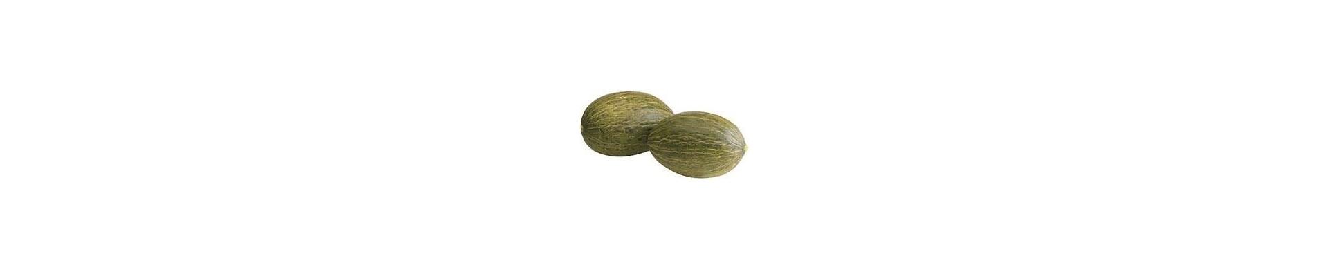 Plant melons - Buy melon plants