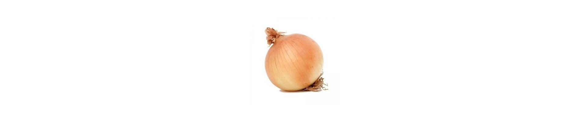 Plantar cebollas - Comprar plantas cebollas