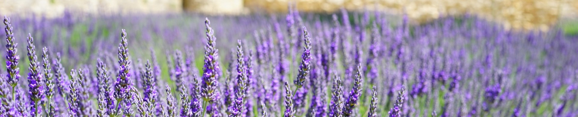 Comprar plantas aromaticas - Venta de plantas aromaticas