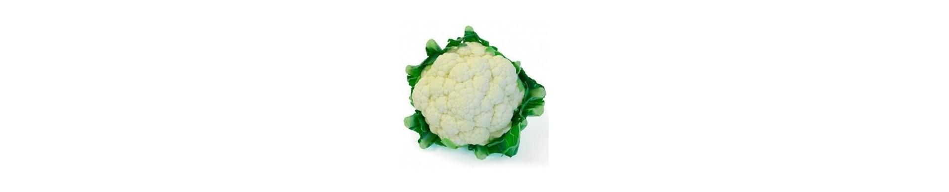Plantar coliflor - Comprar plantas de coliflores