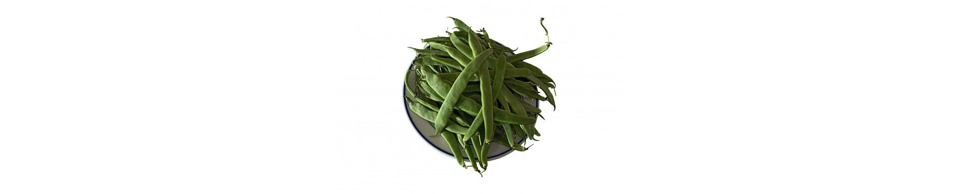 Jewish Plants - Buy Jewish Plant