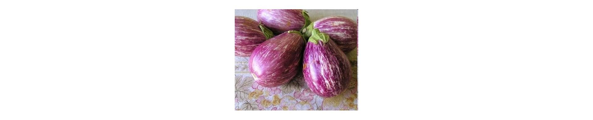 Plant aubergines - Buy eggplant plants