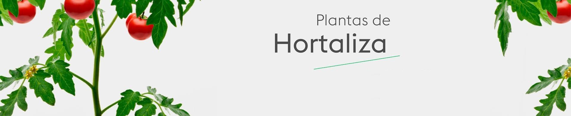 Plantas de huerto - Comprar plantas de hortalizas