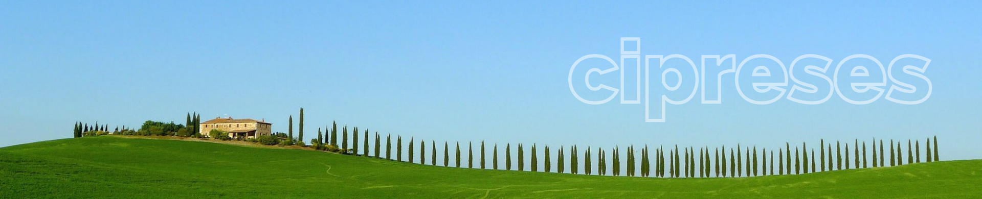 Buy cypresses - Cypress price - Cheap cypresses
