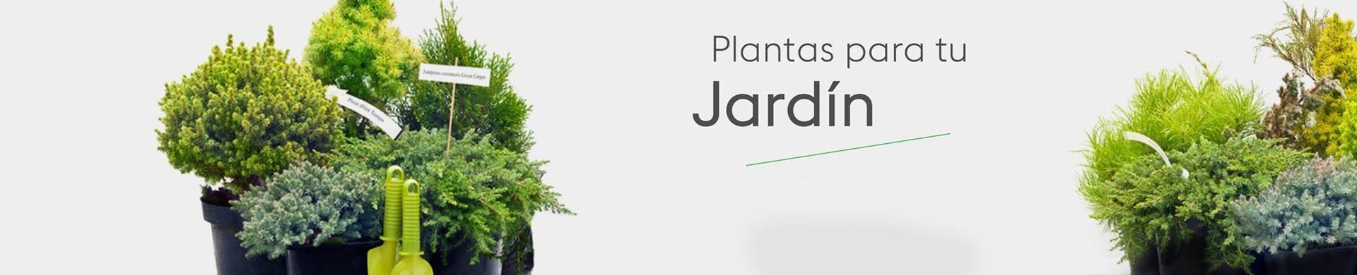 Plantas para jardín - Comprar árboles y arbustos para jardín online
