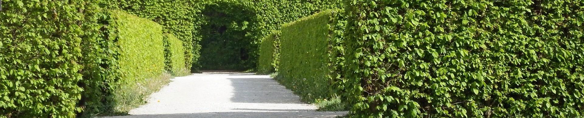 Plantas para setos - Setos para jardin - Comprar setos para jardin