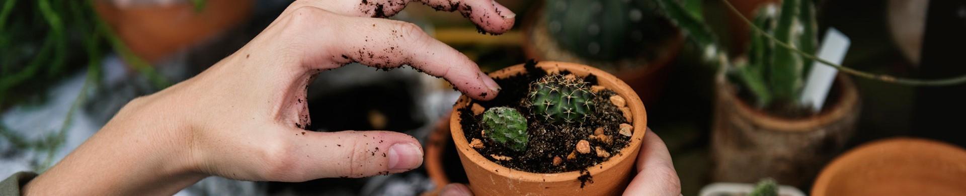 Comprar abonos y fertilizantes - Fertilizantes y abonos