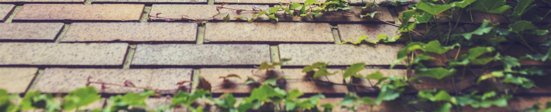 Plantas trepadoras - Comprar plantas trepadoras