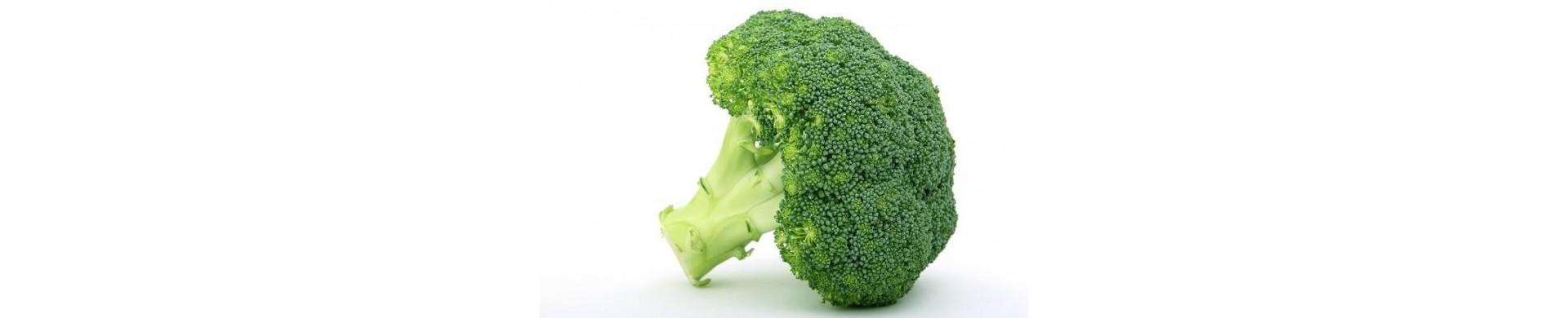 Plantas de brocoli - Comprar brocoli planta